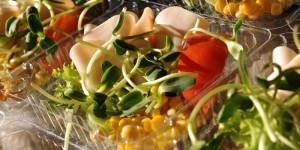 Czy odchudzanie jest w cenie? – wszystko, co chciałbyś wiedzieć o zawodzie dietetyka