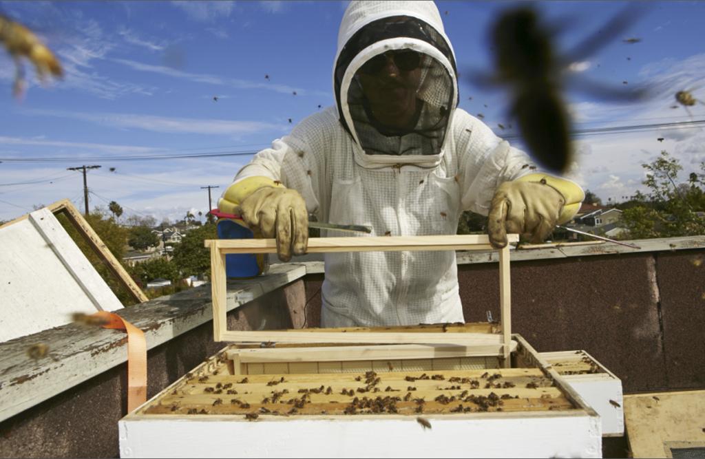 Factorialist_-Beekeeping-copy