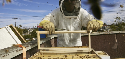 Factorialist_-Beekeeping-copy