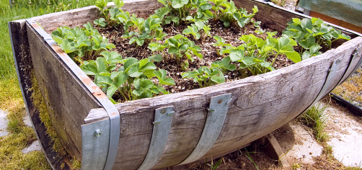 11-Quirky-Easy-To-Do-Garden-Container-Initiatives-11